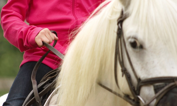 Marquis Farrier Service - Kalamazoo: One or Three Natural Balance Horse Hoof-Trims from Marquis Farrier Service (62% Off)