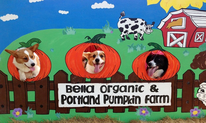 Bella Organic Farm - Sauvie Island: $17.50 for Entry to the Dogathon 5K Trail Run With or Without Your Dog (Up to $35 Value)