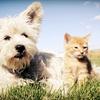 Calgary Pet Expo – Up to Half Off