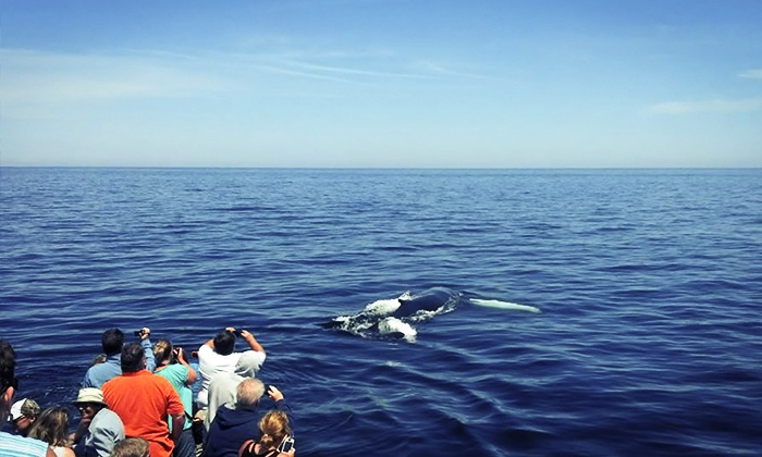 Newburyport Whale Watch - South End: Whale-Watching Tour for One, Tour, or Four from Newburyport Whale Watch (Up to 47% Off)