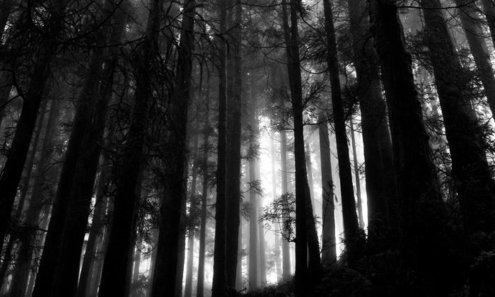 McCauley's Haunted Woods - Nixa: Haunted-Woods Visit for Two or Four at McCauley's Haunted Woods (Up to 52% Off)