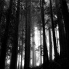 Up to 52% Off at McCauley's Haunted Woods