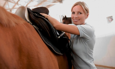 $200 for Six 60-Minute Private Horseback-Riding Lessons at Arcadia Stables ($360 Value)