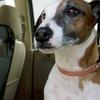 Goodyear Pet Seat Barrier