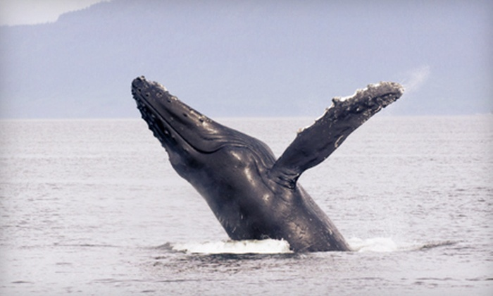 Provincetown Whale Watch - Provincetown Whale Watches: $45 for a Whale Watching Trip for Two from Provincetown Whale Watch in Provincetown ($74 Value)