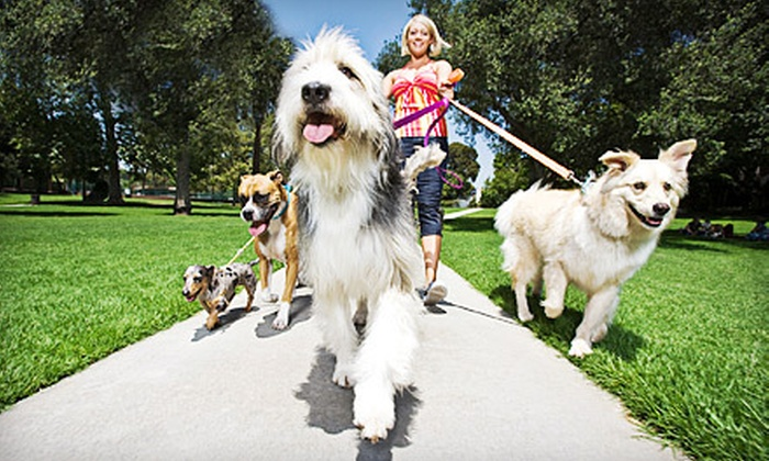 Angels Pet Pals - Harlem: 30- or 60-Minute Dog Walks from Angels Pet Pals (Up to 57% Off). Three Options Available.