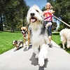 Up to 57% Off Dog Walks from Angels Pet Pals