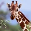 Wildlife World Zoo & Aquarium – Up to 28% Off Visit