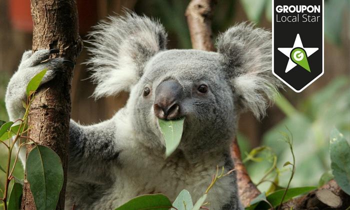 Zoo Duisburg - Duisburg: Charity-Aktion zum Schutz der Primaten: 2 Eintrittskarten inkl. Jubiläumsbuch für den Zoo Duisburg für 29 €
