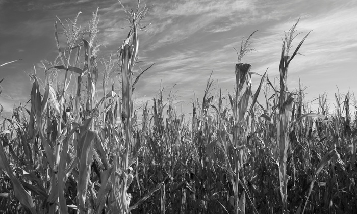 Connors Farm - Danvers: VIP Admission for Two at a Haunted Cornfieldwith Optional Zombie-Themed Paintball Safari at Connors Farm (Half Off)