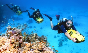 Sydney Dive Safari: From $199 (+$50pp Equipment Hire) for an Open Water Dive Course with Sydney Dive Safari (Up to $1,596 Value)