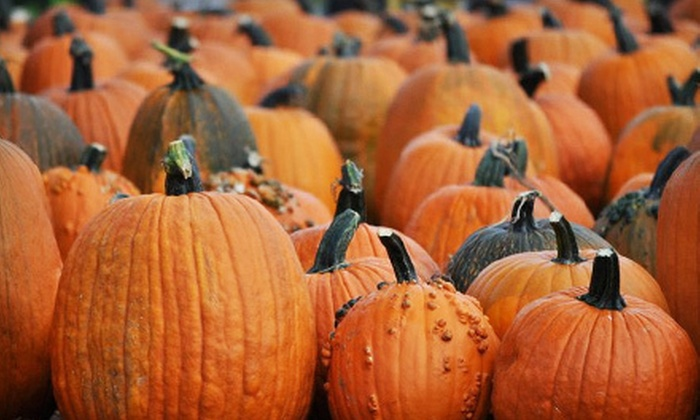 Jumbo's Pumpkin Patch - Middletown: Corn-Maze Outing for Two or Four on Friday or Saturday–Sunday at Jumbo's Pumpkin Patch (Up to Half Off)