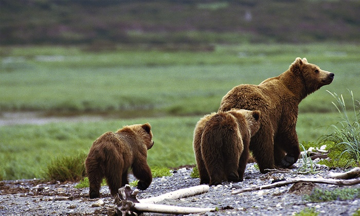 Yellowstone Safari Tours - Salt Lake City: One, Two, or Three Self-Guided Group National-Park Tours from Yellowstone Safari Tours (Up to 48% Off)