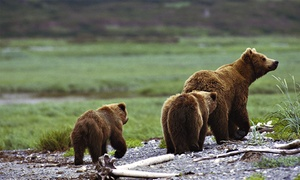 One, Two, Or Three Self-guided Group National-park Tours From Yellowstone Safari Tours (up To 48% Off)