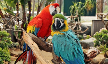 Bird-Sanctuary Tour for Two, Four, or Eight, or Individual or Family Membership at Free Flight (Up to 51% Off)