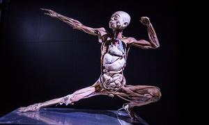 Art BHZ: Human Bodies – O Fantástico Corpo Humano– Shopping Cidade