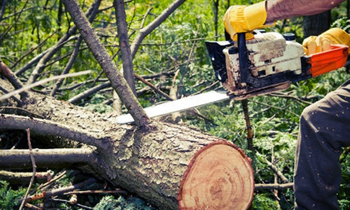 Limitless Landscaping and Tree Care - Halifax: $99 for Up to Three Hours of Tree Removal or Maintenance Services from Limitless Landscaping and Tree Care ($250 Value)