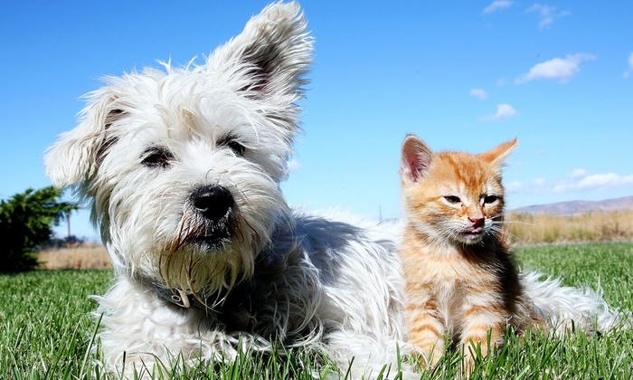 MaxFund Wellness Clinic - Lincoln Park: Feline Distemper Vaccine or Canine Distemper Parvo, or Laser Treatment at MaxFund Wellness Clinic (Up to 50% Off)