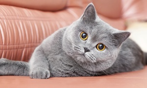 Cat Cafe Mad: Cat Playtime and Beverages at Cat Cafe Mad (Up to 50% Off). Two Options Available.