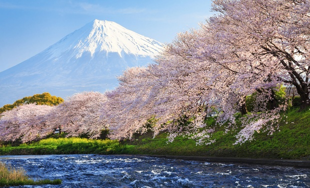 TripAlertz wants you to check out ✈ 8-Day Tour of Japan with Airfare from Affordable Asia Tours. Price per Person Based on Double Occupancy. ✈ 8-Day Tour of Tokyo & Kyoto with Airfare - Tour of Tokyo & Kyoto