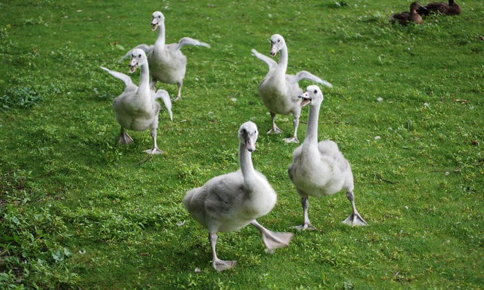 Kellogg Bird Sanctuary - Augusta: One-Year Individual or Household Membership to Kellogg Bird Sanctuary (Up to 49% Off)