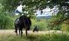 Passeggiate a cavallo di un'ora