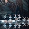 """Swan Lake"" – Up to 42%Off Ballet"