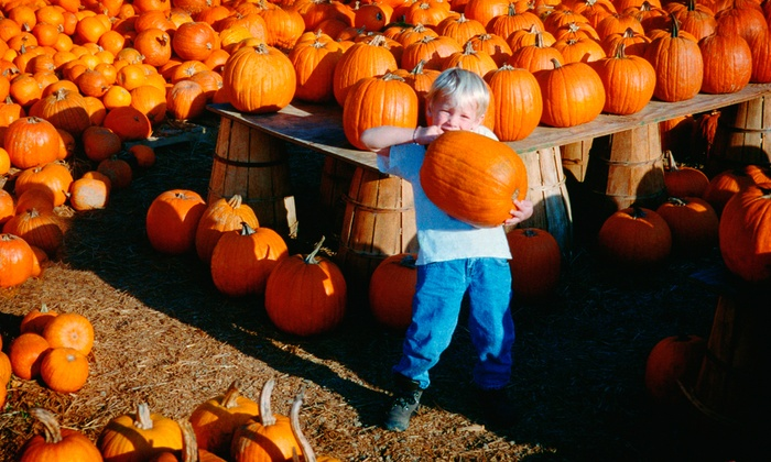 Green Hand Farm Park - Abingdon: Farm-Park Adventure and Pumpkins for Two, Four, or Six at Green Hand Farm Park (Up to 54% Off)