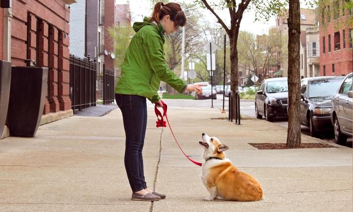 Behave Dog Training - Kansas City: Three or Six 60-Minute Dog-Training Sessions from Behave Dog Training (Up to 52% Off)