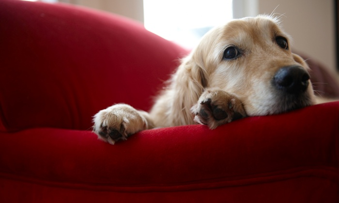 So Petable - Hampton Roads: $89 for a Pet-Photo-Shoot Package with Prints and Image CD from So Petable ($350 Value)