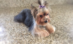 My Pookie's Spaw: Grooming Services from My Pookie's Spaw, Inc. (38% Off)