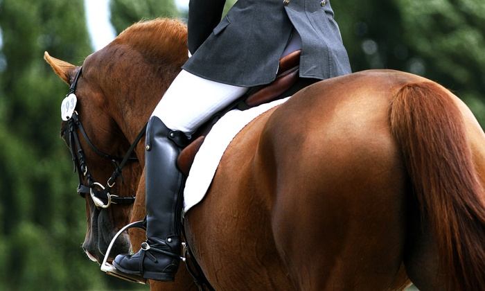 Needville Horseback Riding - Needville: $29 for a 60-Minute Private Horseback Riding Lesson at Needville Horseback Riding ($60 Value)