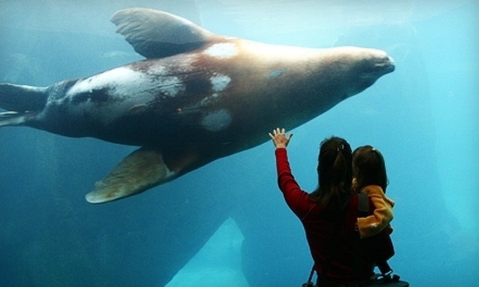Alaska SeaLife Center - Seward: Visit to Alaska SeaLife Center for Two Adults, or Two Adults and Up to Three Children (Up to 57% Off)