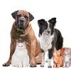 Chequeo y vacunación para mascota