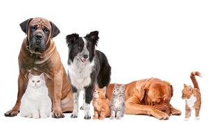 Yorki: Chequeo y vacunación para perro, gato, hurón o conejo con opción a microchip y alta en el registro desde 14,95€ en Yorki