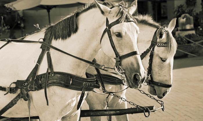 Lacey's Arabian Ranch - North El Dorado: One Driving or Riding Lesson at Lacey's Arabian Ranch (44% Off)