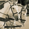 44% Off Carriage-Driving or Horseback-Riding Lessons or Camp