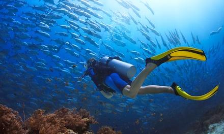 Corso di sub Padi Discover Scuba Diver con teoria e pratica in mare (sconto fino a 89%)