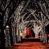 100 LED Solar-Powered Fairy Lights