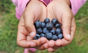 Horse Listeners Orchard: Blueberry Picking for Two or Four at Horse Listeners Orchard (Up to 42% Off)
