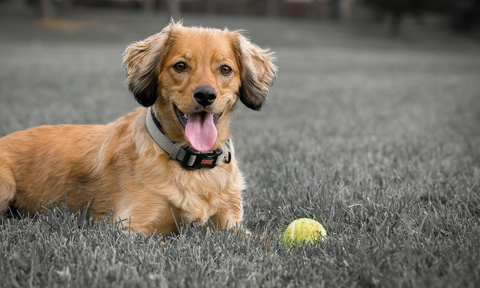 Puppy Eyes Photography - Toronto (GTA): C$69 for Outdoor Pet Photo Shoot with Print and Online Gallery from Puppy Eyes Photography (C$175 Value)