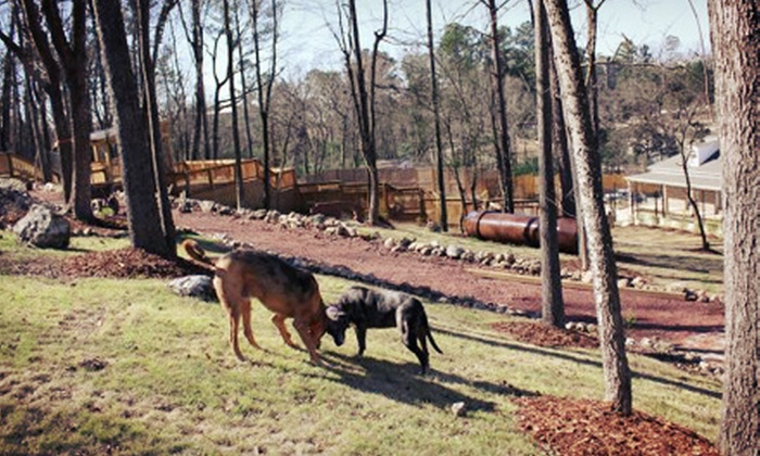 Cahaba Beach Dog Park - Hoover: $39 for Dog-Park Membership, Temperament Evaluation, and One-Night Boarding Package at Cahaba Beach Dog Park ($86 Value)