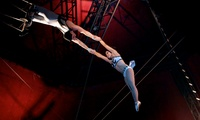 The Netherlands National Circus, 7 - 19 March, Keighley or Hartlepool (Up to 40% Off)