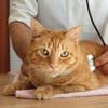 44% Off Pet Care