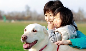 Weston Lakes Animal Hospital: Dog or Cat Dental Cleaning or Vaccination Package at Weston Lakes Animal Hospital (Up to 71% Off)