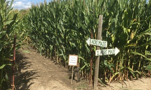 Up to 50% Off Corn Maze and Hayride at Fleitz Pumpkin Farm at Fleitz Pumpkin Farm, plus 6.0% Cash Back from Ebates.
