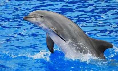 image for Daytime Cruise Admission for One Adult or Child from Captain Mark's Dolphin Watch Cruise (Up to 30% Off)