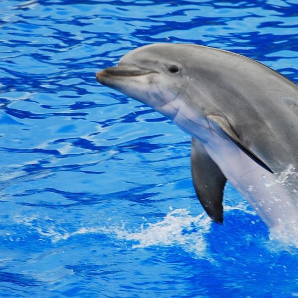 287c1f842c6f Captain Mark s Dolphin Watch Cruise - From  16 - Hilton Head Island ...