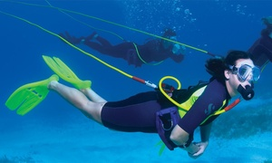 Keys Huka Dive: Seashell Hunt and Snorkel Adventure for Four or Six from Keys Huka Dive (Up to 62% Off)