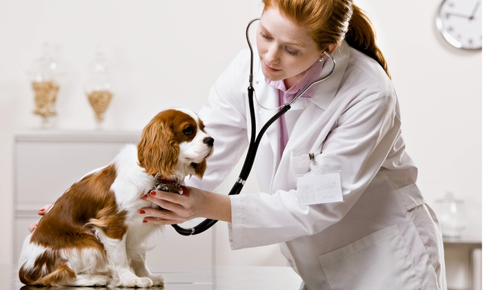 Sun-Surf Animal Hospital - Indian Rocks Beach: $49 for a Dog-Vaccination Package at Sun-Surf Animal Hospital ($119 Value)